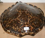 A turtle shell, length approx 54cm (minor faults and repairs).