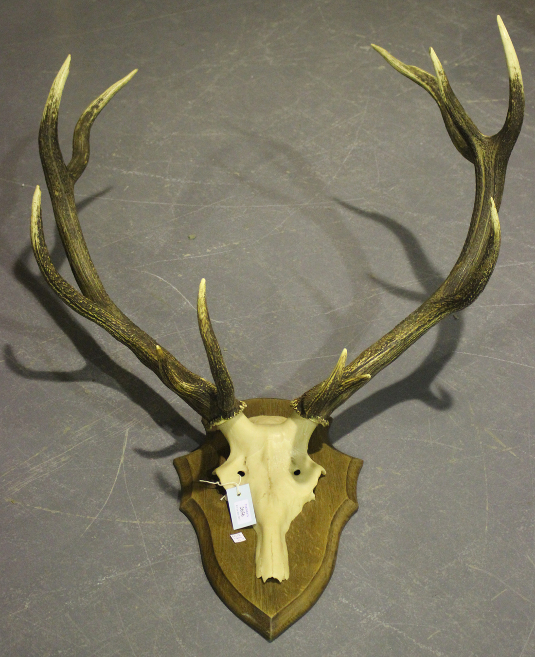 antler muslim singles Causes of early antler casting  this can be an annual event caused by harvesting too few antlerless deer, or a single event caused by a mast crop failure, .
